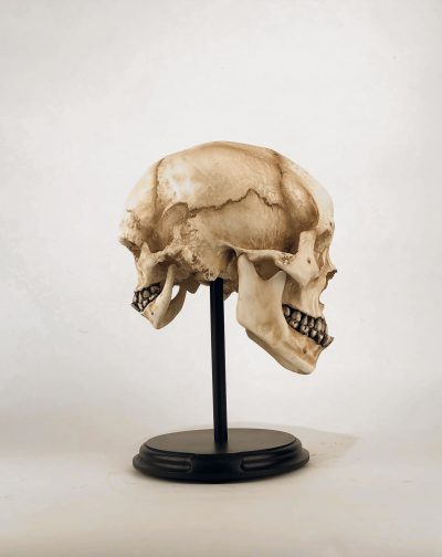 Mordrake Skull